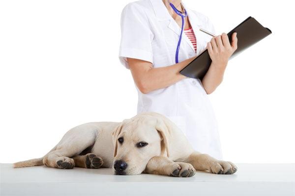 Caine bolnav Foto: dogsnaturallymagazine.com