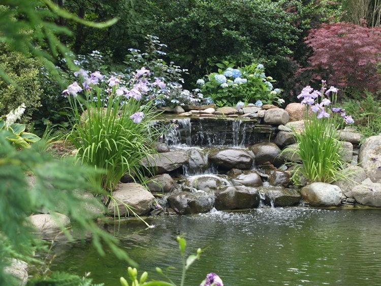 Iazul din gradina, Foto: gardenpondsguide.com