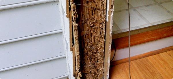 Sfaturi pentru protejarea casei de termite, Foto: redbeacon.com