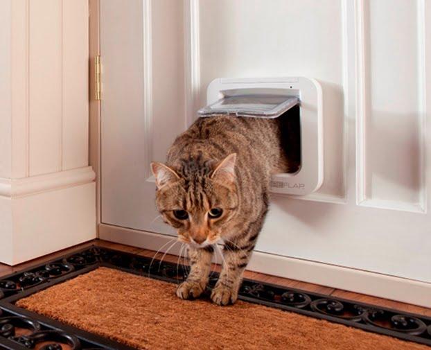 Usa pentru pisica, Foto: servicemagic.co.uk