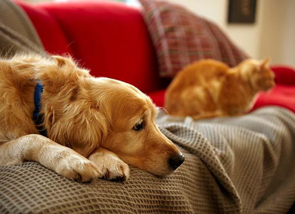 Viata cu un animal de companie in apartament, Foto: biospotactivecare.com