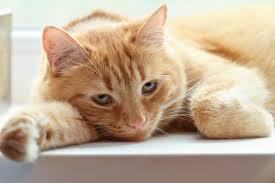 Pisica alergica Foto: monteivideo.com.uy