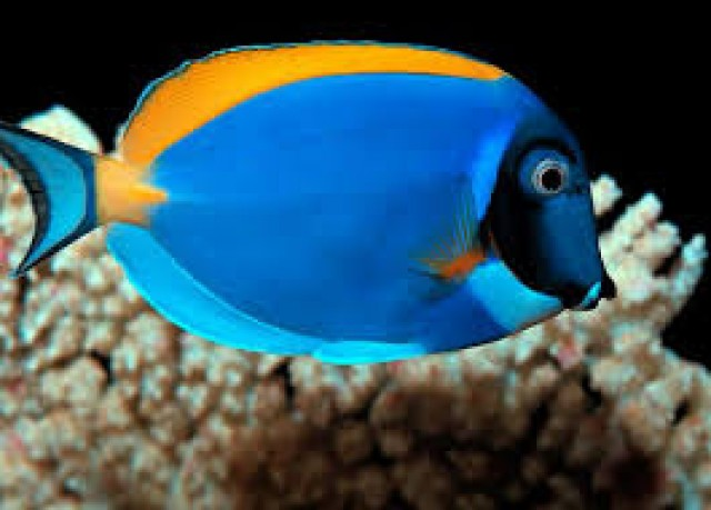 Pesti de acvariu Foto: oradeahub.com