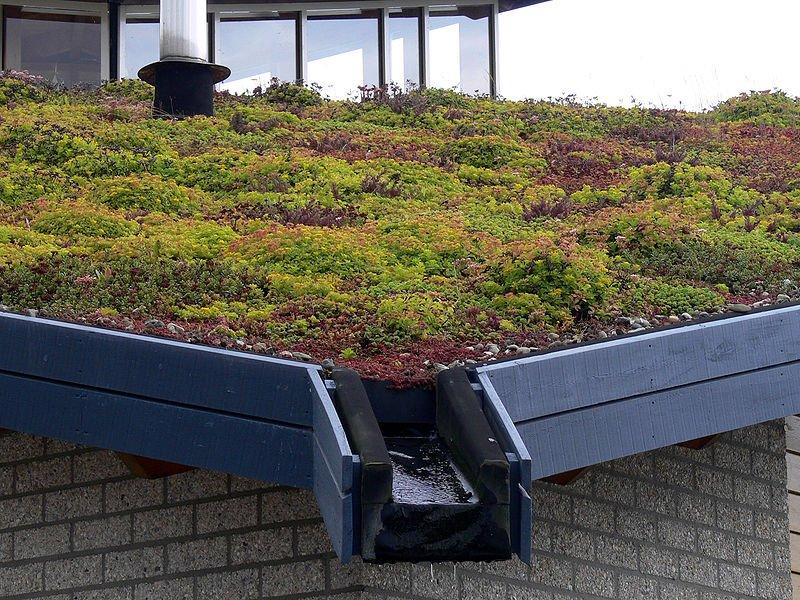 Avantajele acoperisurilor verzi, Foto: greenbusinesswatch.org