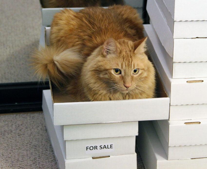 Pisica de vanzare Foto: vampyvarnish.com
