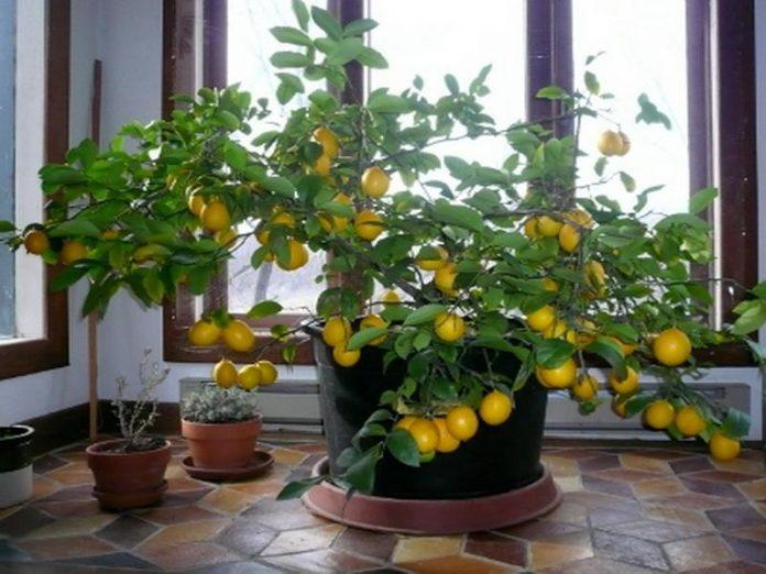 Ce fructe puteti creste in locuinta, Foto: vissbiz.com
