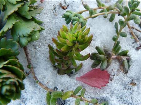 Cum ingrijiti acoperisul verde pe timp de iarna, Foto: greenrooftechnology.com