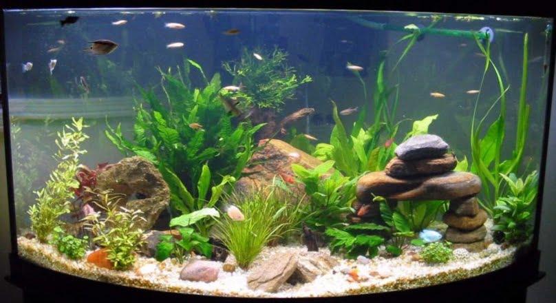 Decor de acvariu Foto: exotifishaquarium.com