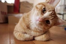 Pisica curioasa Foto: examiner-enterprise.com