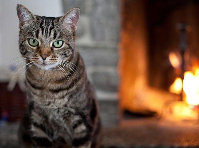 Pisica, Foto: topstoryonline.in