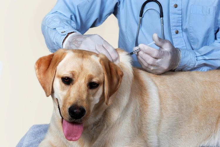 Vaccin caine Foto: buytexasdeals.com