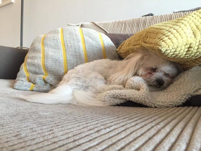 Eutanasierea unui câine poate scuti animalul de suferință în cazul unei boli grave