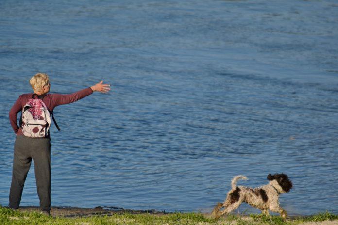 Dresarea câinilor – cum îi putem învăța aruncarea discului