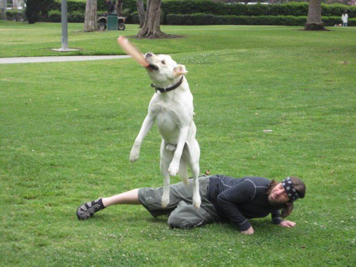Disc dogging Foto: www.baileysports.com