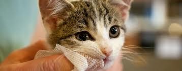Ingrijirea dintilor pisicii, Foto: 2zoo.com