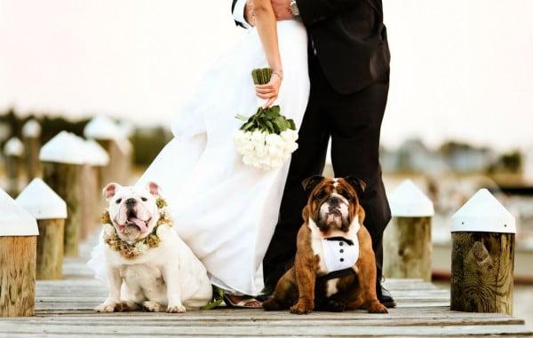 Animale de companie la nunta Foto: www.bridalguide.com