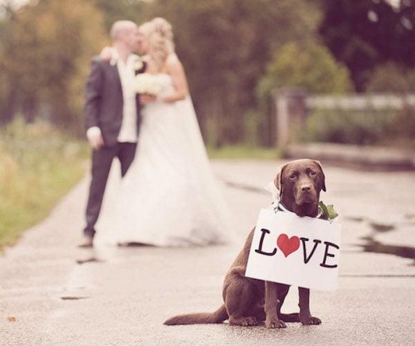 Cainele - invitatul de onoare la nunta Foto: www.bridalguide.com