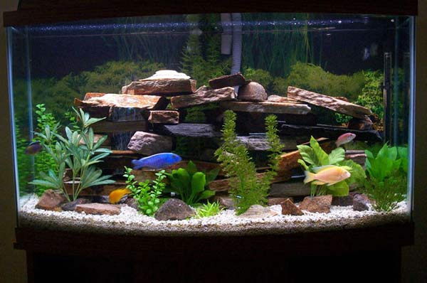 Lucruri interesante de adaugat in acvariu Sursa foto: eastbourne-ponds.com
