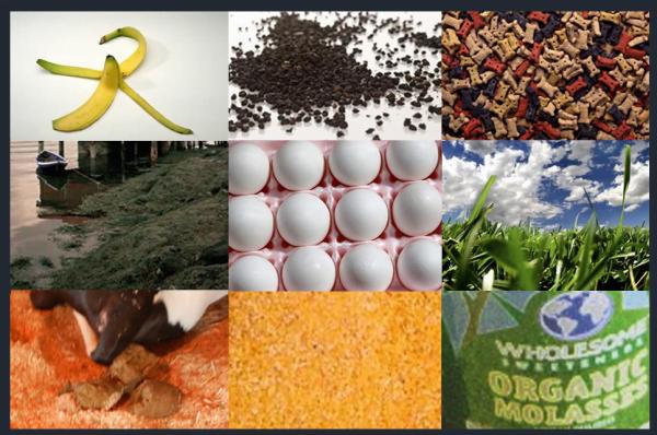 Resturi alimentare care pot fi utilizate pe post de fertilizatori pentru plantele din ghiveci Foto: www.herbsandoilsworld.com