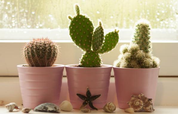 Alegerea ghivecelor pentru pervaz - ghivece mici pentru cactusi Sursa foto: www.thedailygreen.com