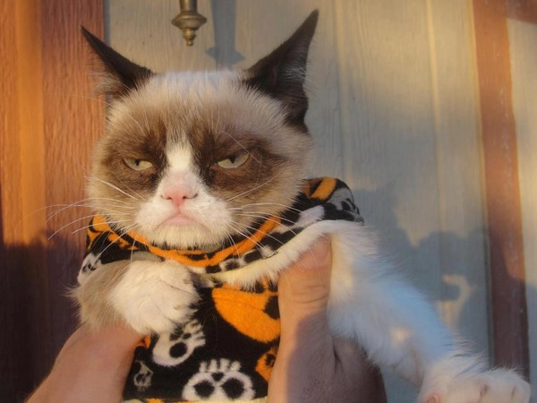 Grumpy cu hainuta