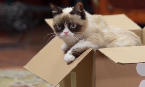 Grumpy in cutie