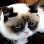 Grumpy la prezentarea de carte - A Grumpy book