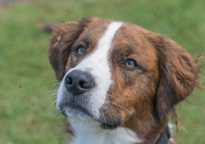 Care sunt simptomele și metodele de tratament ale faringitei la câini și pisici