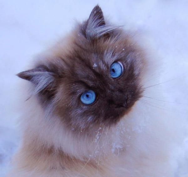 Pisica, Foto: izismile.com