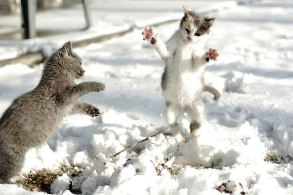 Pisici in zapada, Foto: izismile.com