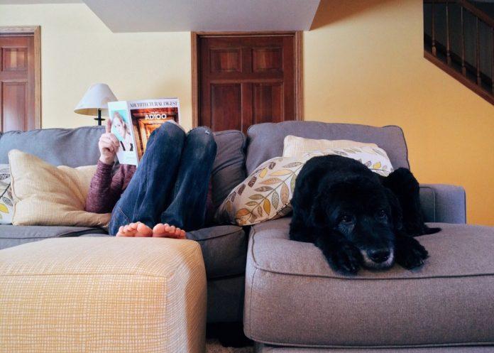 Cum alegi un pat sau cum faci un culcuș pentru câine Citește sfaturile noastre