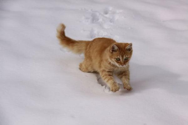 Pisica in zapada, Foto: izismile.com