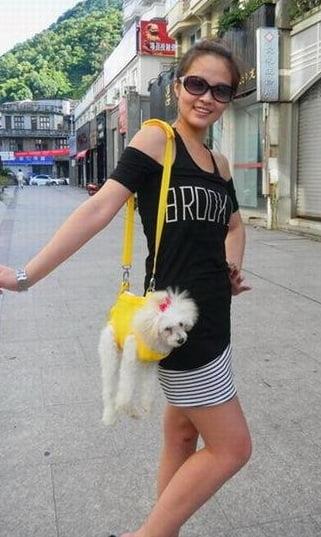Geanta comoda pentru caine, Foto: dailyimagebuzz.blogspot.com