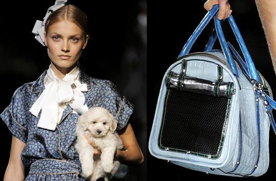Geanta pentru caine, marca Dolce&Gabbana (2395 dolari), Foto: petsugar.com