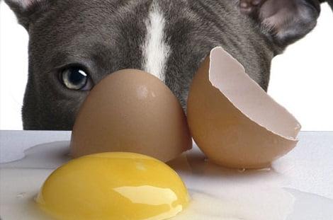 Galbenusul de ou este bun pentru caine, Foto: caninevisionscookingfordogs.blogspot.ro