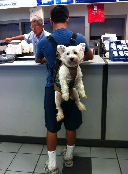 Un mod comod de a tine animalul de companie, Foto: dailyimagebuzz.blogspot.com
