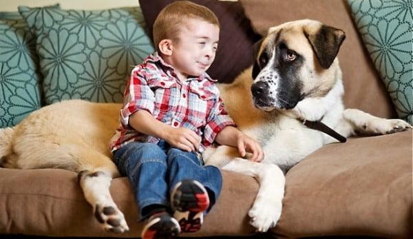 Baietelul Owen si catelul Haatchi, Foto: ecologiaverde.com