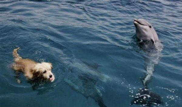 Cainel Joker inoata alaturi de delfini