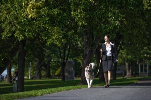 Câine disciplinat, este plimbat in parc, Foto: caninegoodcitizen.files.wordpress.com