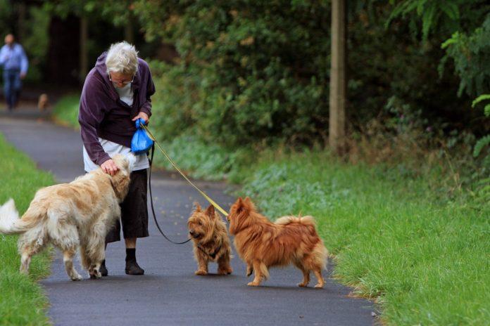 Ce înseamnă un câine disciplinat și cum instruiți un animal de companie