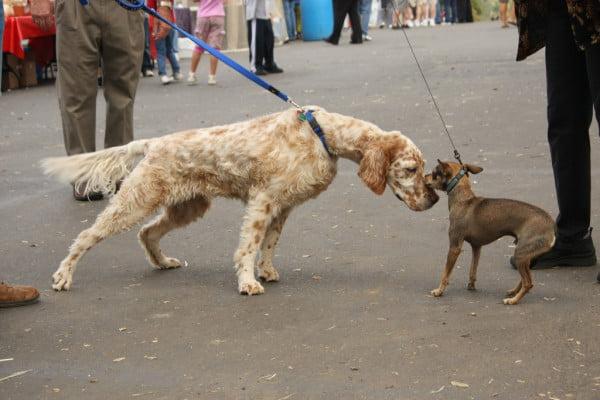 Cum se salută câinii, Foto: rescueadog.files.wordpress.com