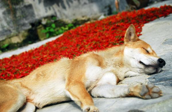 Anafilaxia la câine, Foto: photos.te-ai-de.com