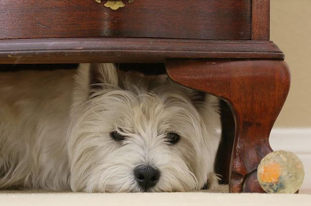 Câine, Foto: scienze.fanpage.it
