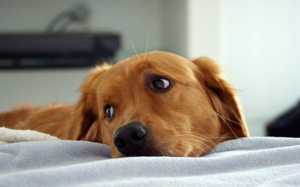 Câine, Foto: free-picture.net