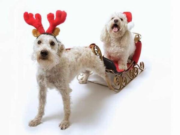 Accesorii distractive pentru câini, Foto: ba-bamail.com