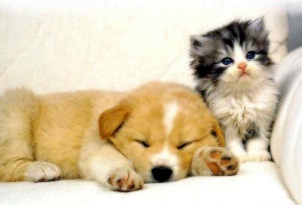 Infecția cu E. Coli la câini și pisici , Foto: blog.huayuworld.org