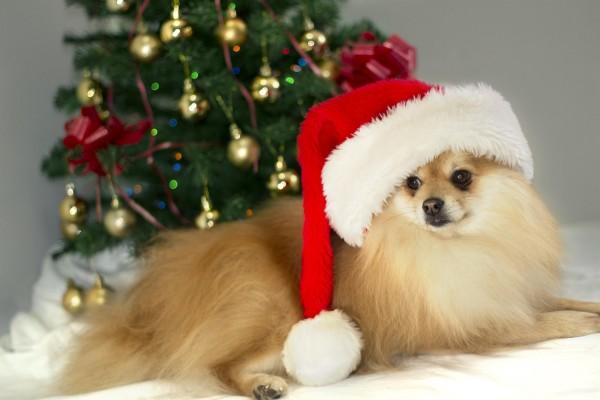 Căciulă de Crăciun, Foto: hqwallbase.com