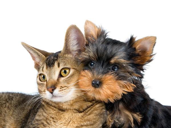 Intoxicația cu monoxid de carbon la câini și pisici, Foto: wallpapers.free-review.net