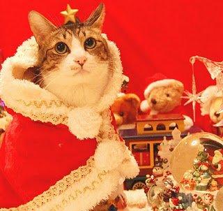 Pisică cu pelerină roșie, Foto: funnyimagecollect.blogspot.ro