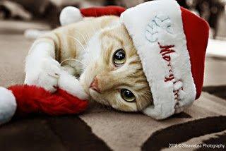 Pisoi cu căciuliță roșie cu alb , Foto: funnyimagecollect.blogspot.ro